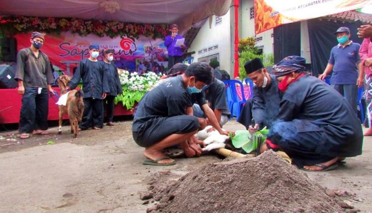 Penyembelihan Kambing sepasang ritual tradisi tolak balak di Borobudur