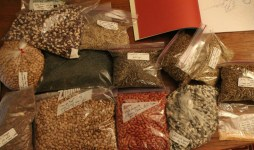 cropped-seeds-on-table2.jpg
