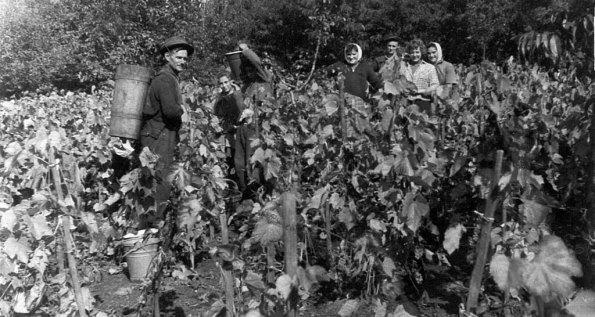 Magyar borvidékek