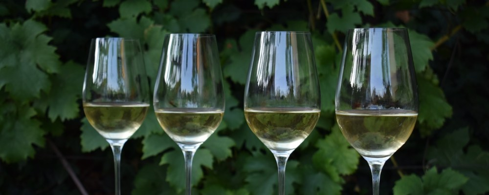 A fehérbor útja a szőlőtől a palackig