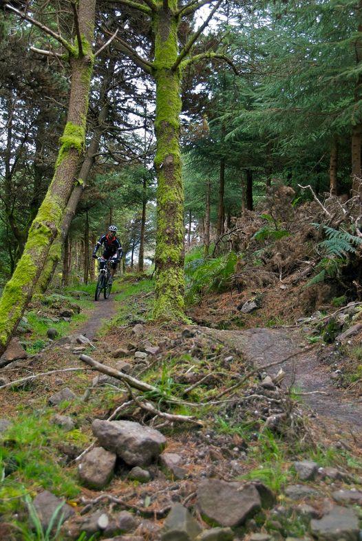 medium-Ballyhoura Trails, Co. Limerick (2)