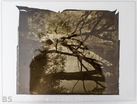"Carbon print on glass from a wet plate collodion negative, format 10x12"". River Krka, Gabrje, Slovenia, EU."