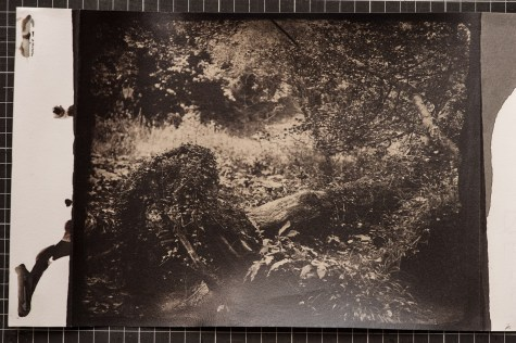 Albumen print