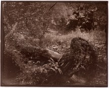 Low contrast carbon print from wet plate collodion negative
