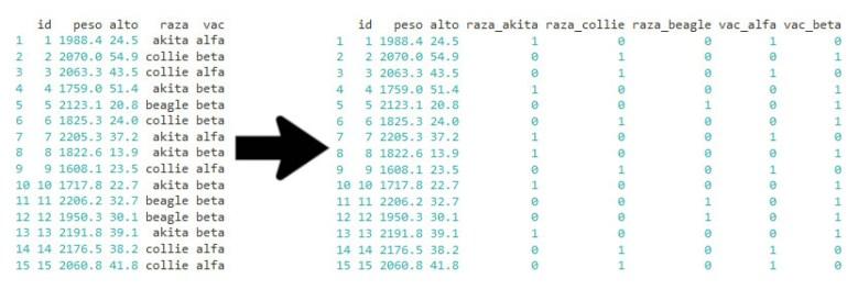 Variables dummy con R