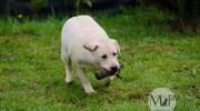 giocare col cane al riporto
