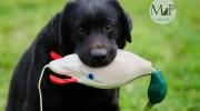 educazione e addestramento cani