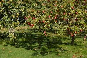 Boscrowan orchard