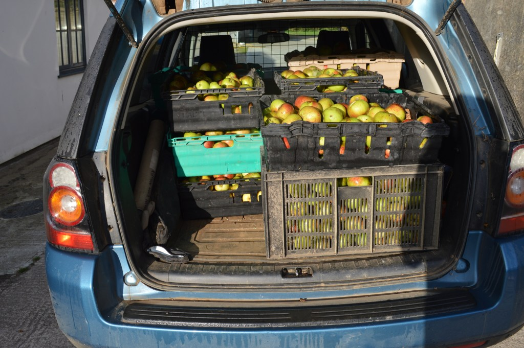 apples all loaded