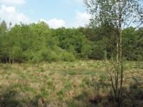 oprukkend bos (3)