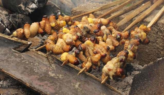 Oleh oleh Makanan Khas Papua Sate Ulat Sagu