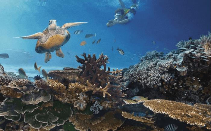 Fasilitas Snorkeling Pantai Nglambor