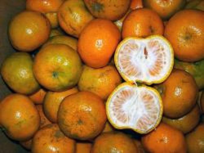 makanan khas garut jeruk