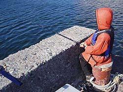 白浜メジナ釣り