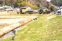 霞ヶ浦水系マブナポイント