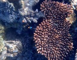 Nemo again!