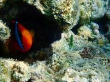 Found more Nemos!!