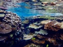 An amazing coral garden beneath!