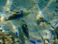 Two triggerfish!