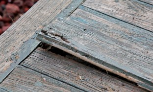 Rotting fir deck board