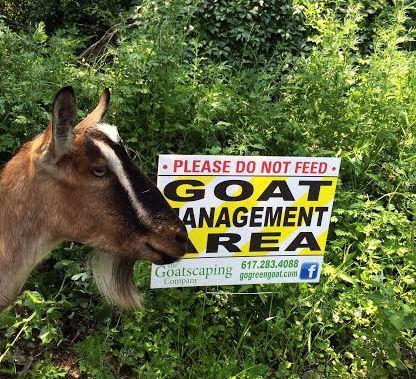 2014_Goat_Boston