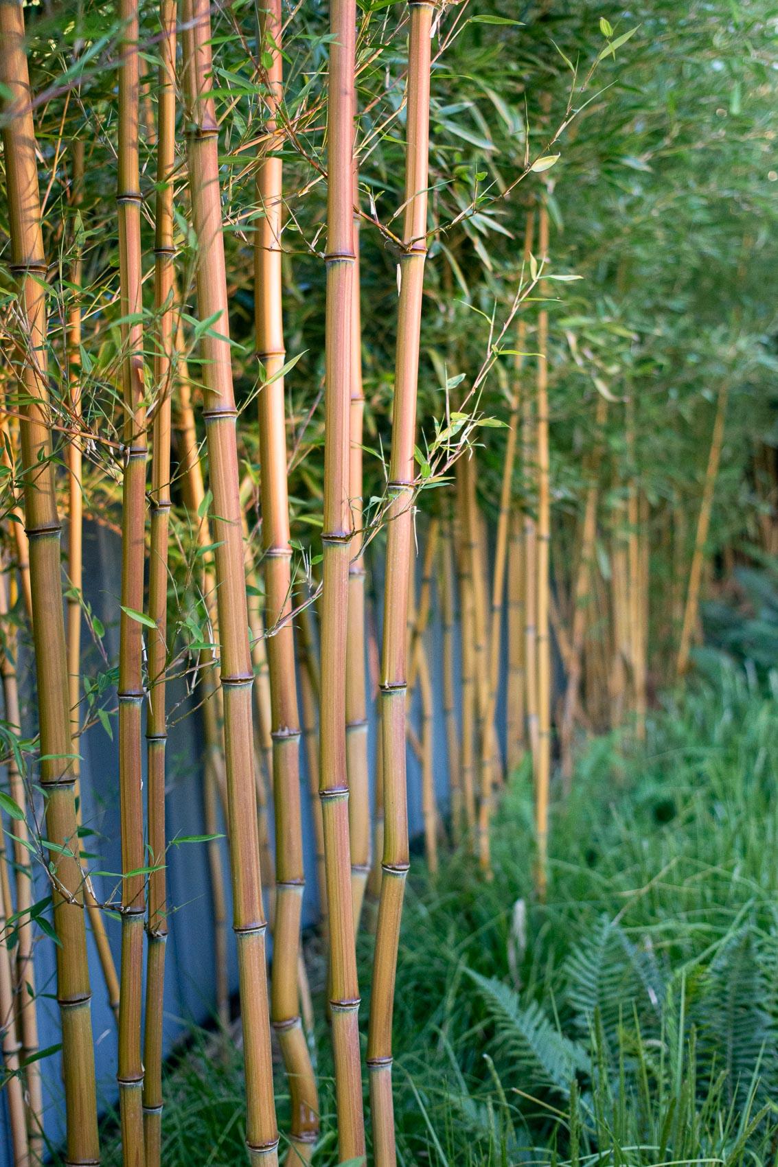 Burnaby - Botanica Design