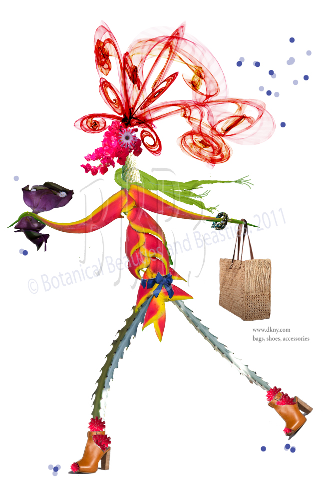 Birdelli - Fashion Designer and Model. (Bird of Paradise, Cactus, Bougainvillea)