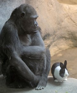 Gorilla and Bunny