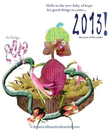 Baby of Hope 2013