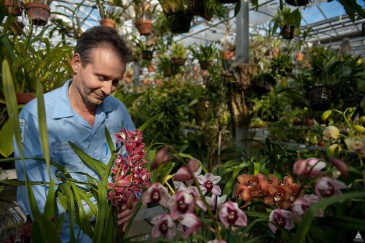 photo credit: Caring for Orchids at the U.S. Botanic Garden via photopin (license)