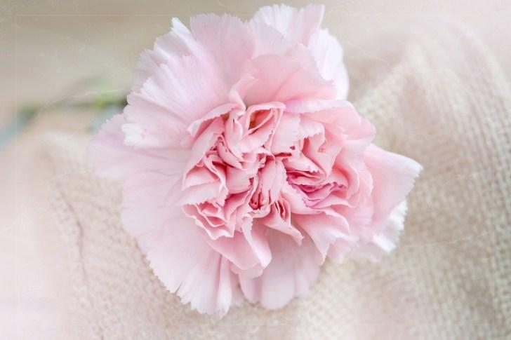 flower-1364071_1920