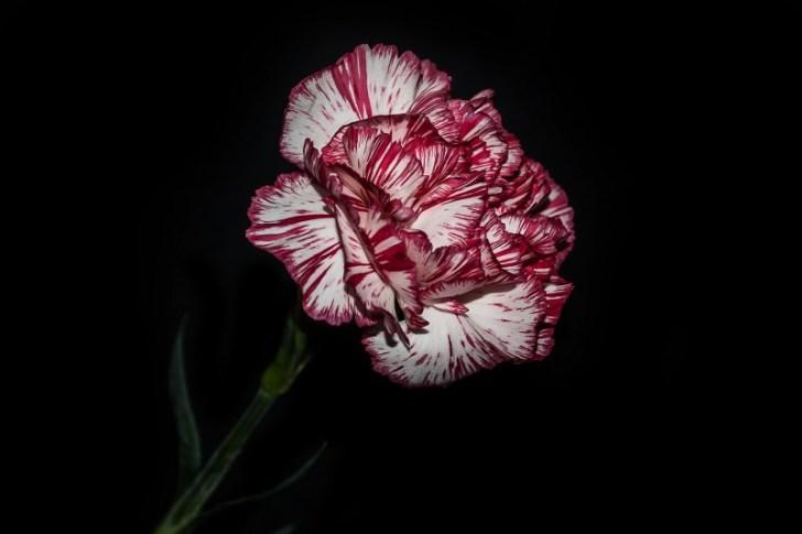 flowers-1240166_1920