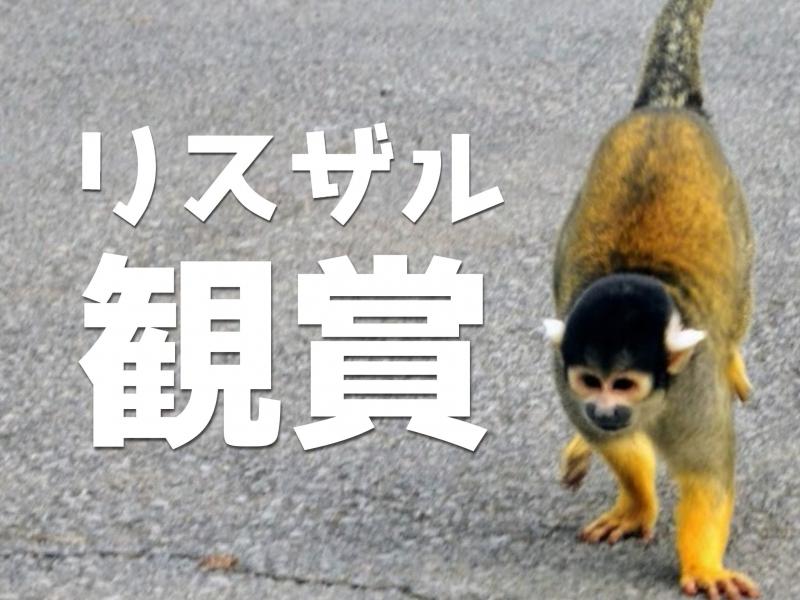 およそ5年ぶりの『伊豆シャボテン動物公園』。来園のお目当ては園内を駆け回る「リスザル」です!