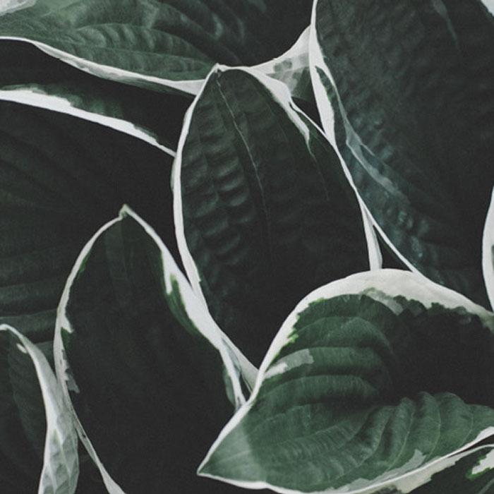 Botanichem Organic Products