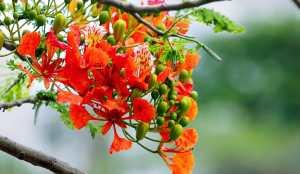 Drought tolerant plant with orange flowers