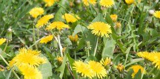 useful weeds