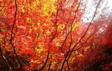 色づく秋の京都 詩仙堂