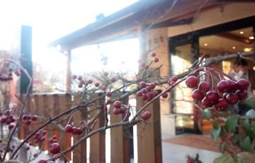 アロニアの赤い実