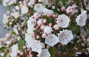 金平糖のような蕾に、白い花…?