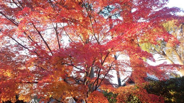 京都、紅葉の穴場【真如堂】(真正極楽寺)