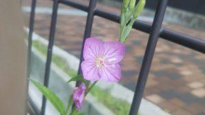 薄いピンク色の小花。花弁は4枚。