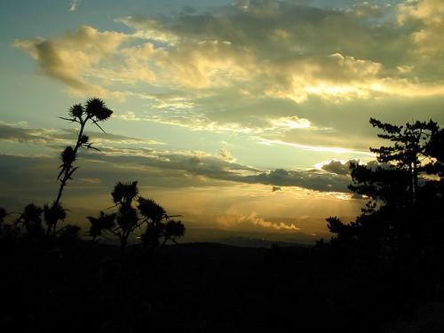 Black Plants at Sunset. Photo (cc) Tambako the Jaguar.
