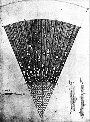 Collected letters of Antoni van Leeuwenhoek, Vol. II, Amsterdam, Sweets and Zeitlinger Ltd, 1941.