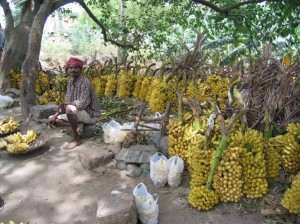 Man with banana harvest
