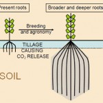 Breeding crop plants with deep roots: their role in sustainable carbon, nutrient and water sequestration