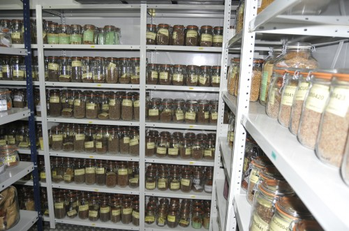 Many jars on shelves in a seedbank.