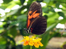 Butterfly. Photo: Amy Lloyd.