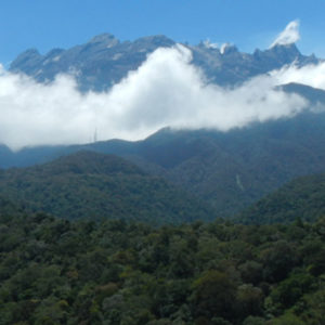 Canopy structure and conifer dominance in rainforests
