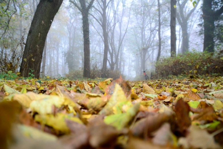 Beech wood and leaves