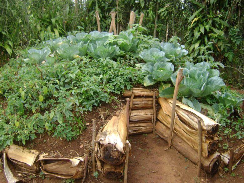 Kitchen garden in Musanze District